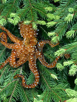 pacific northwest tree octopus poster  Help Save The ...